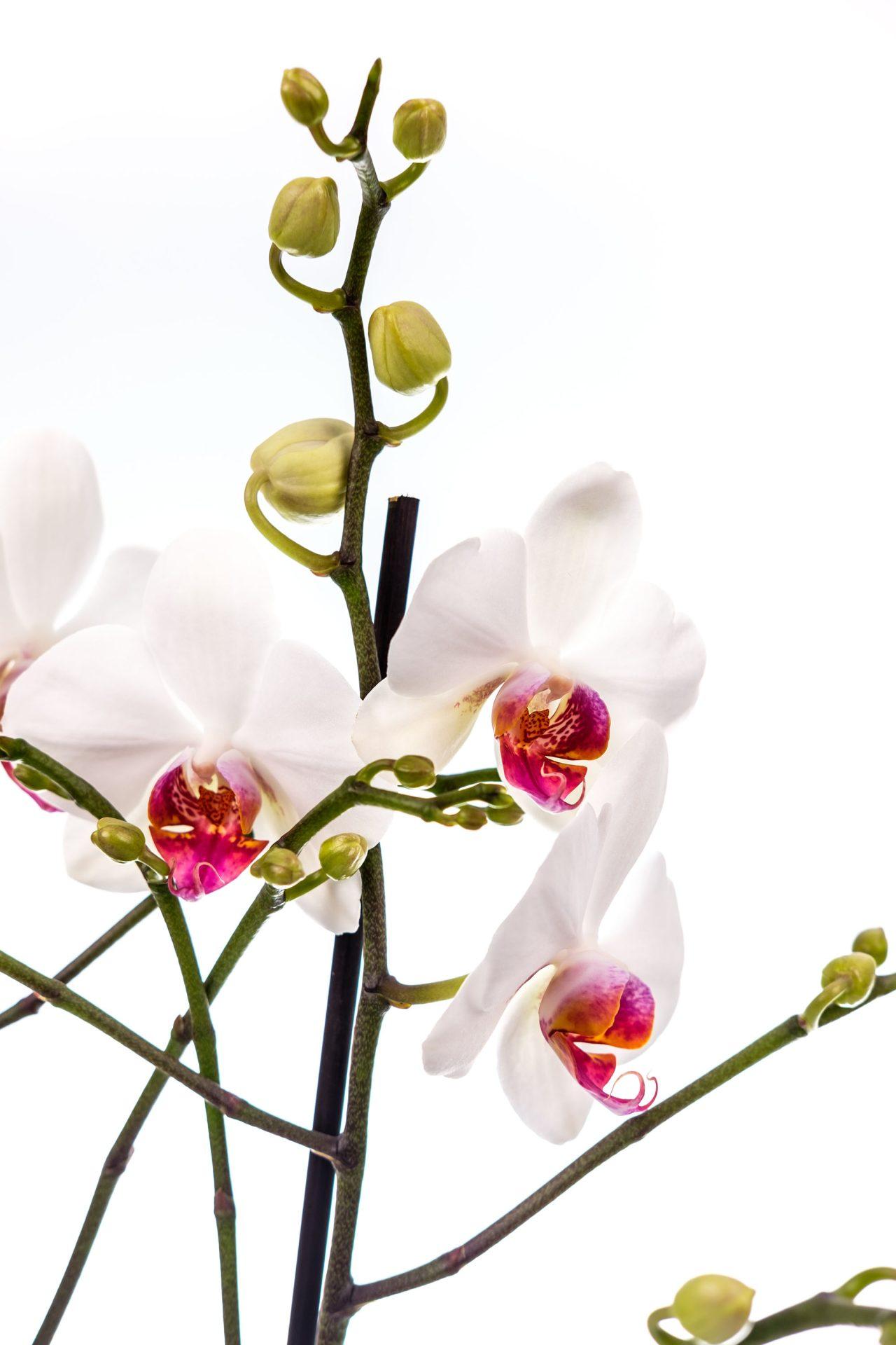 Naturals-Planten-10